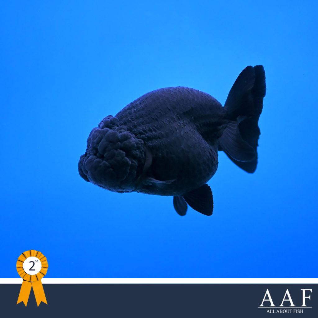 รูปปลาทองงานสุพรรณ