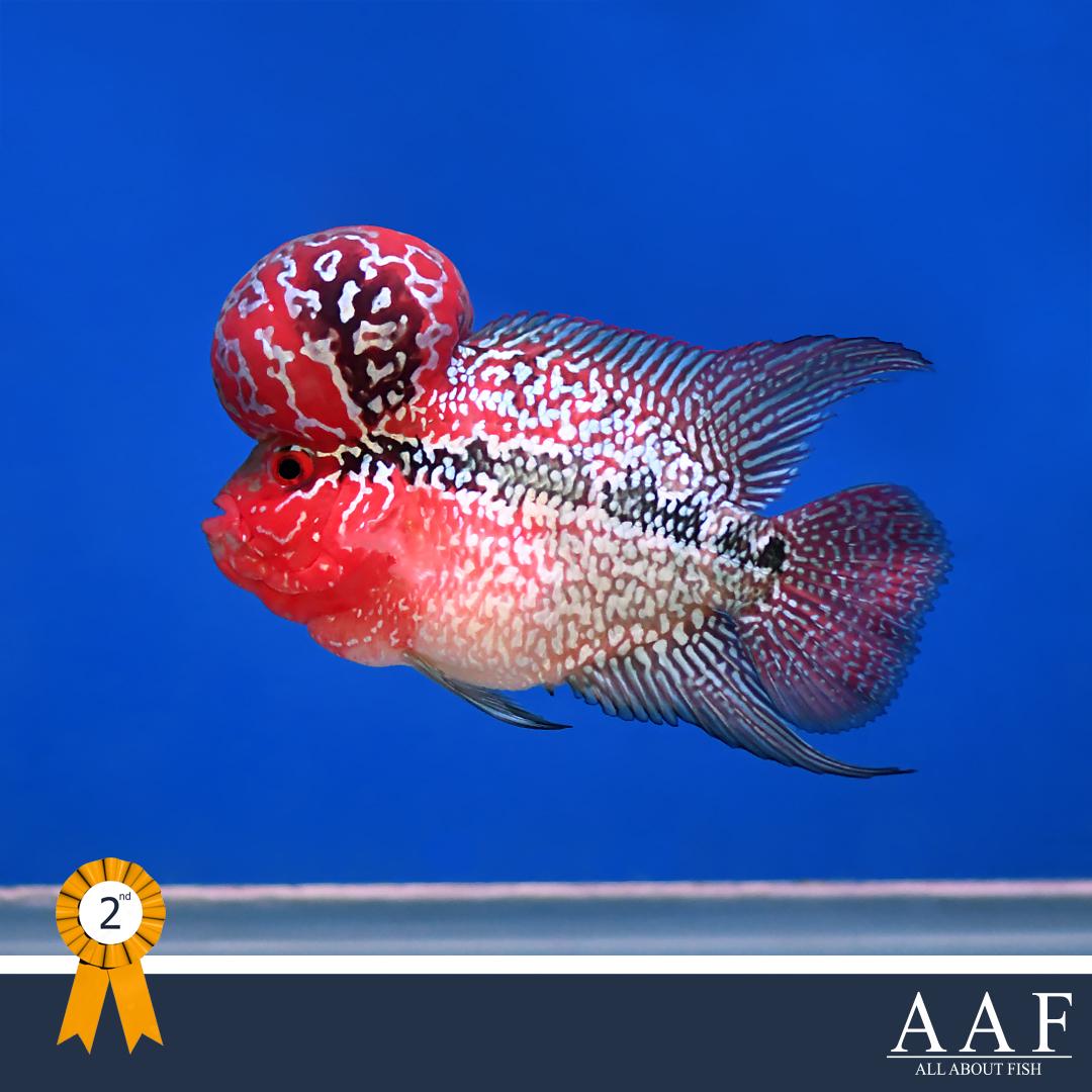 รูปปลาหมอ งานประมงน้อมเกล้า 2019