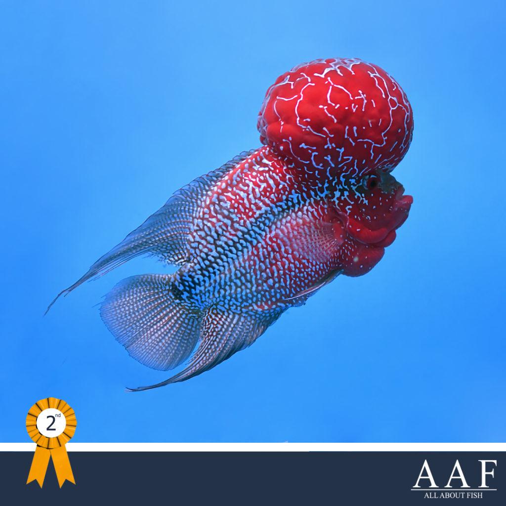 รูปปลาหมอที่ได้รับรางวัล งานประมงรวมใจ 2019