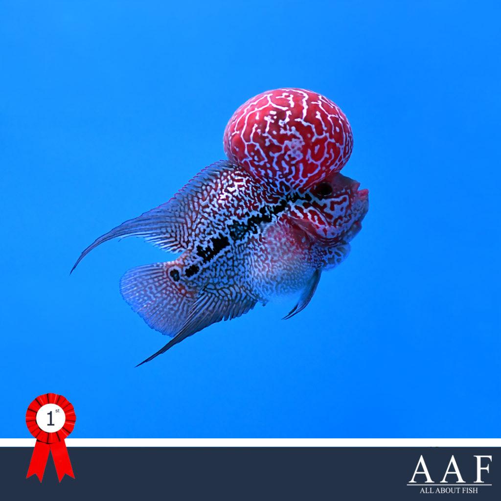 รูปปลาหมอที่ได้รับรางวัลงานประมงรวมใจ 2019