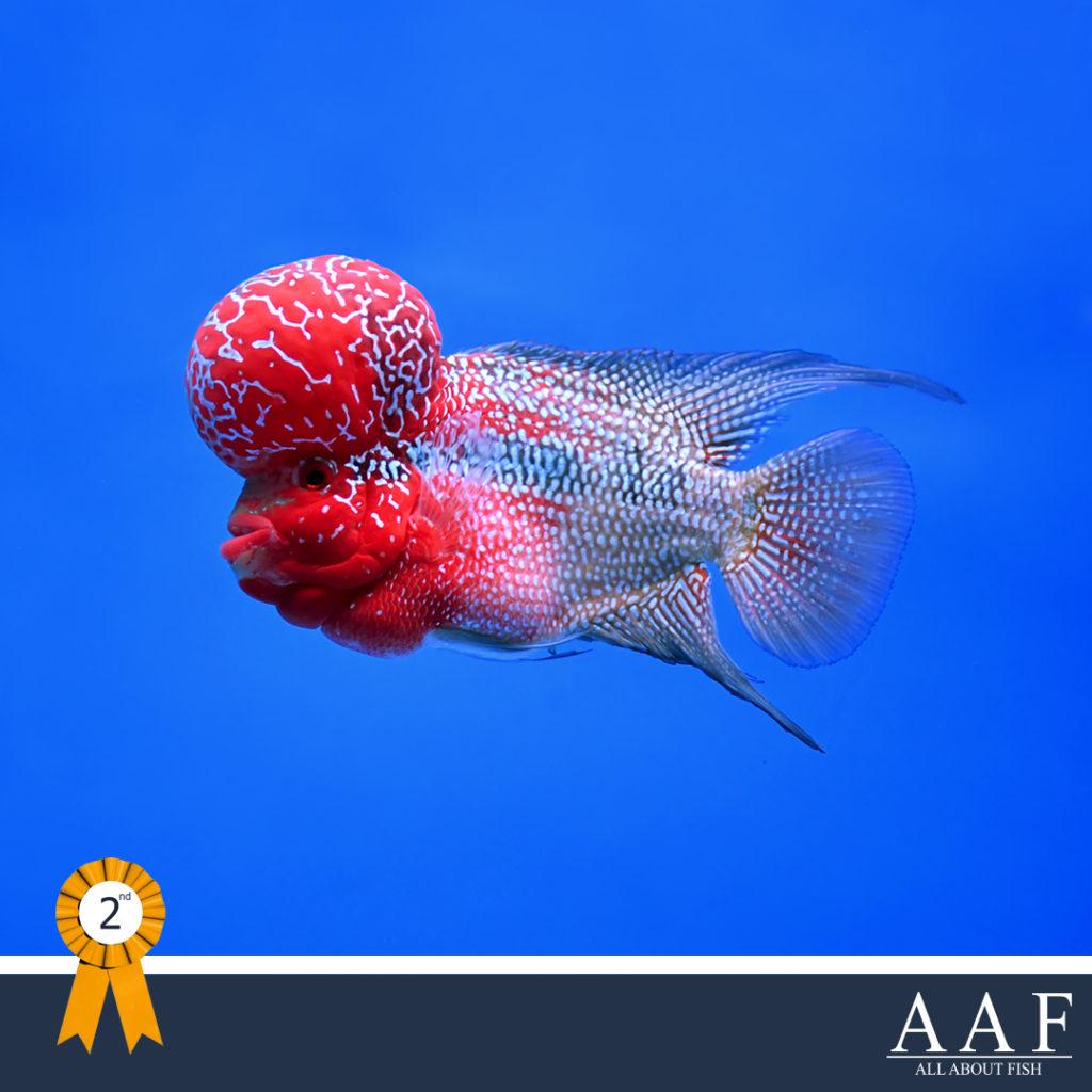 รูปปลาหมอที่ได้รับรางวัล งานประมงรวมใจ